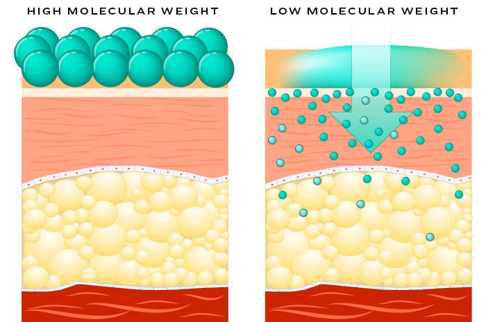 ha-molecular-weight-comparison